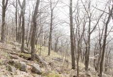 Luskville Trail