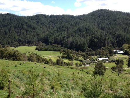 The farm I worked/lived on in Gisborne.