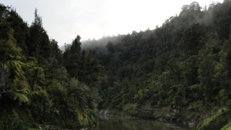A morning along the Wanganui River. Heavy mist hanging in the trees